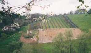 azienda vitivinicola il rio cerrini